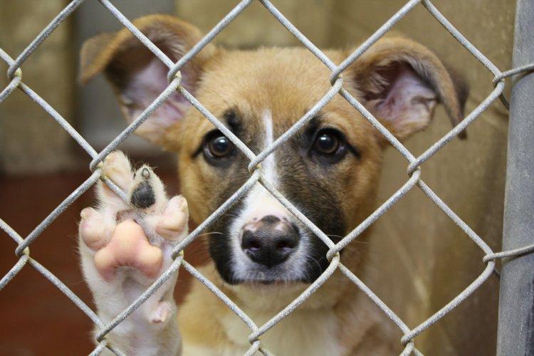 Гуманне поводження з тваринами