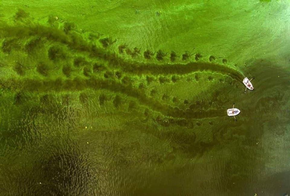 Зелений Дніпро: що нам відомо?