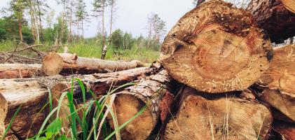 В Карпатах продовжують незаконно рубати ліс!